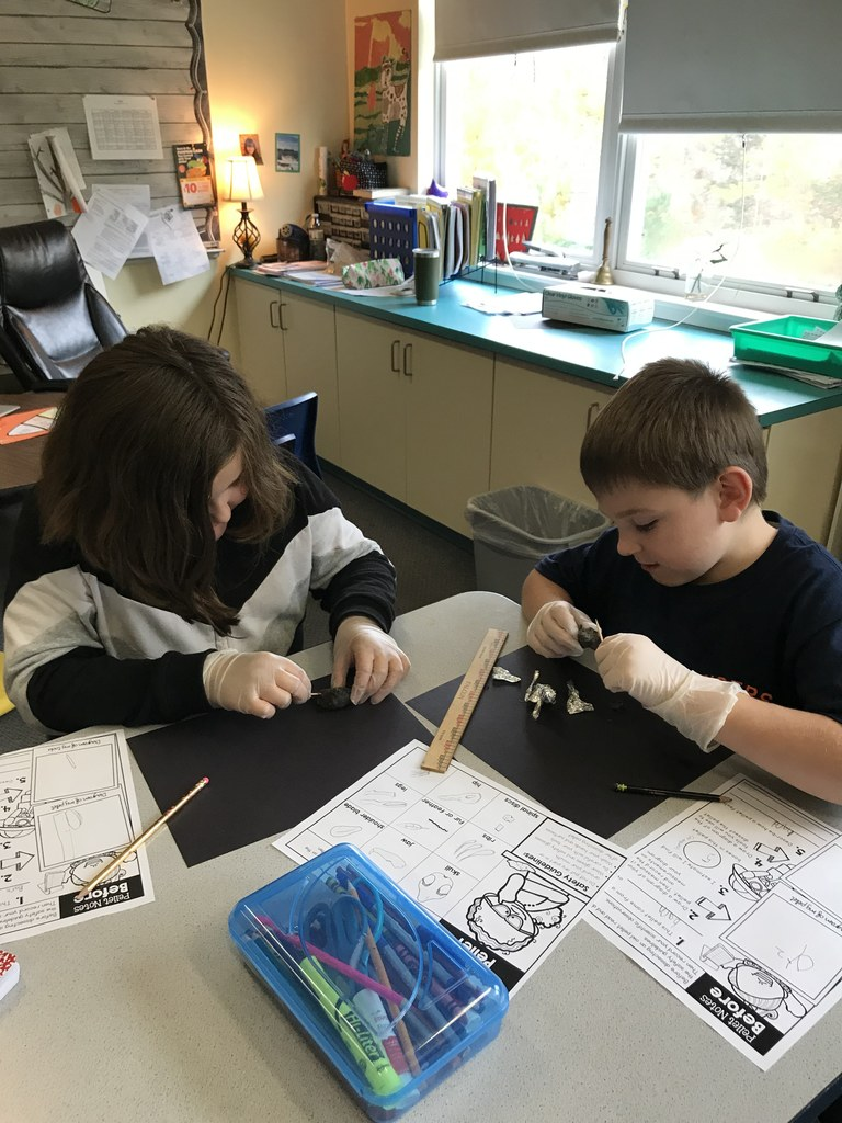 Students study owl pellets